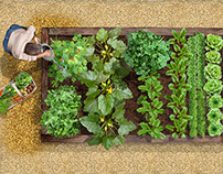 Raised Veg Beds | Stuart Jackson-Carter
