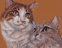 Cats Illustrations