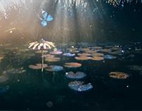 Beautiful Nature: Butterfly Breakdown