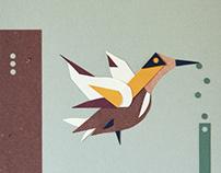 Animazione Birds