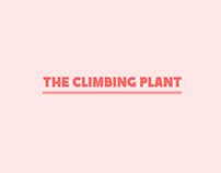 The climbing plant
