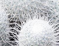 Polar & Cactus