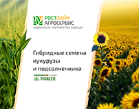 Семена Pioneer