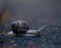 My neighbour Snail, june 2018