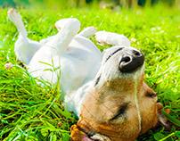 В траве валяться - клещей не бояться