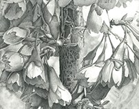 ROSACEAE Graphite Pencil Drawing