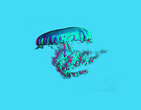 Jelly Jellyfish