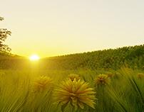 corona-render / Nature /Coucher de soleil