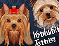Yorkshire terriers paintings done in Photoshop CC.