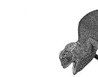 Kama Kama Kameleon