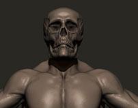 Anatomy Sculpting Study