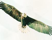 Vectoriel Eagle