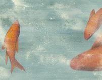 Fish - Panda Gialla, LineaEdizione