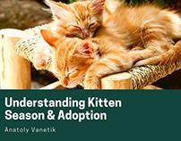 Understanding Kitten Season & Adoption
