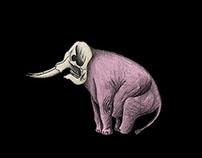 M. Elephanto