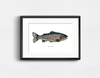 Rainbow Trout / Watercolor