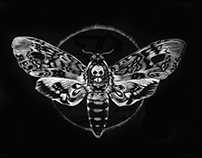 Scratchboard Illustration / Bat & Death's-head Hawkmoth