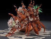 Hermit Crab_02