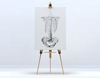 Anatomical drawings with graphite pencil