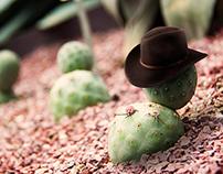 Mr Cactus