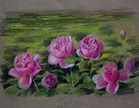 """Этюд """"Любимые розы."""" Крафт, карандаши. 29 x 42 см."""