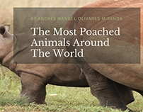 The Most Poached Animals Around The World