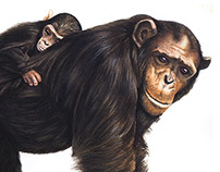 The Tisch Family Zoological Garden