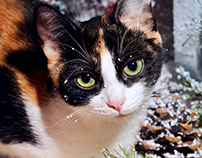 Cat on frozen window sill.Portraits
