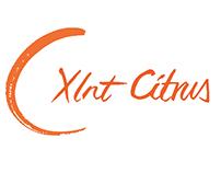 XLnT Citrus Re-brand