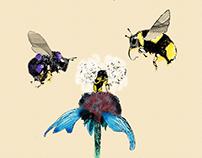 Zangões / Bumblebees
