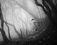 White Crater Mist - I