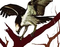 SAGE Magazine Osprey Illustration