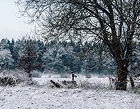 Winterpostcard from Heilshorn