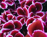 Flowers Pt. VIII