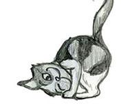 Animal Sketch Development