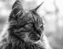 Cat Portrait B&W, n.1-Zeudi