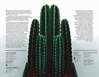 Diseño editorial // Consume local Hermosillo