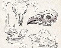 Sketches: Animal Skulls