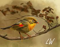 红嘴相思鸟—Leiothrix lutea