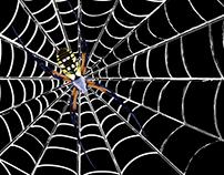 UHU - Spider