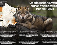 Plan d'action national loup