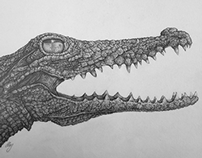 Pencil Illustration of a Crocodile