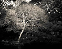 Shosei-en Gardens, Kyoto