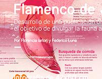 Flamenco de James - Infografía - 2018