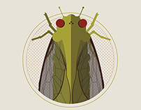 Cicada: Nature's Noisy Neighbor