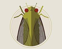 Cicada: Nature's Noisy Neighbor