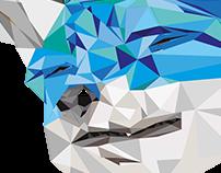 Floofy Faced Blue Fox