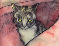 Sketch of a Cat