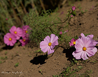 COSMOS IN THE SUN captured by Nikon D800