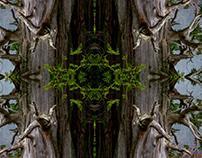 Arboreal Antlers Suite 2013 - 3645